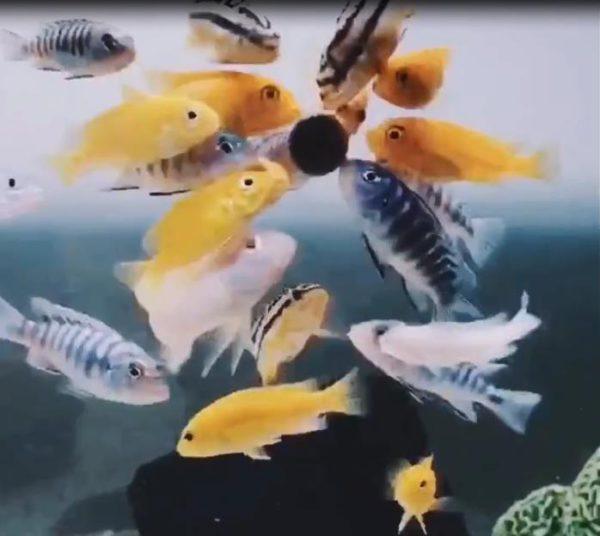 Fish Food Tablet Spirulina Flakes Healthy Ocean Nutrition Fish Food for Aquarium Ornamental Fish Tropical Fish Pet Home 10/20pcs 4